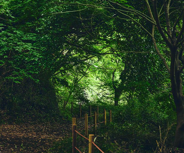 20年間手つかずの森が、冒険の舞台に