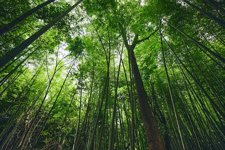 コース2 ささやきの竹林